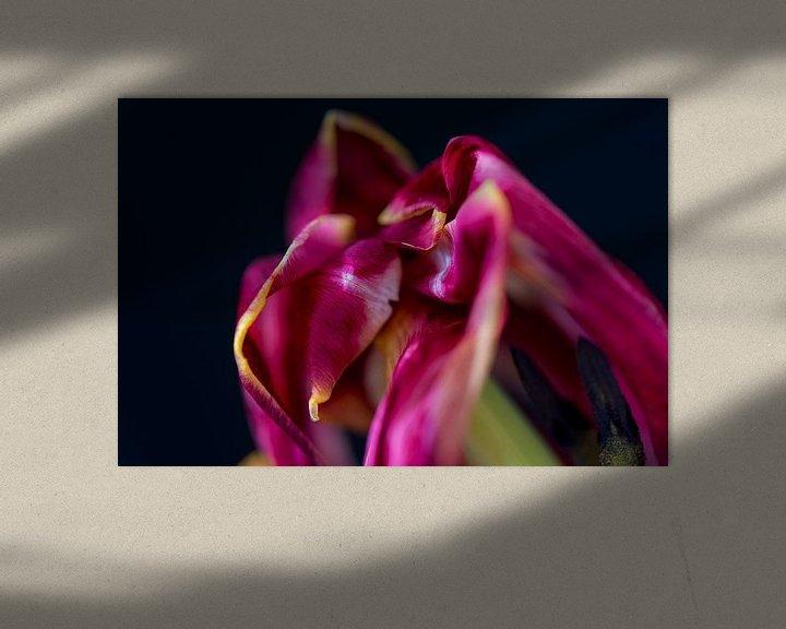 Impression: Tulp sur Maerten Prins