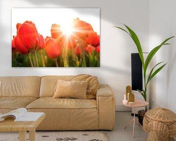 Zonnige rode tulpen close up von Dennis van de Water