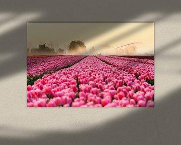 Pink Tulips von Dennis van de Water