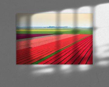 Tulpenvelden in de flevopolder von Dennis van de Water