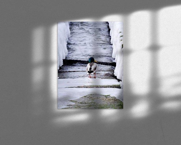 Beispiel: Ente auf Damm von Jörg Hausmann