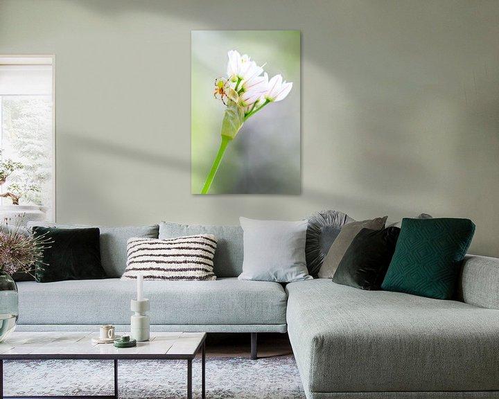 Beispiel: Komkommerspinnetje op witte bloemetjes von Dennis van de Water