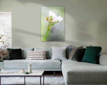 Komkommerspinnetje op witte bloemetjes von Dennis van de Water