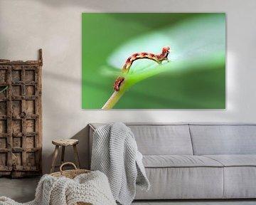 Rupsje op een groen blad in de lente von Dennis van de Water