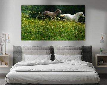Pferde In Freiheit von Daphne Photography