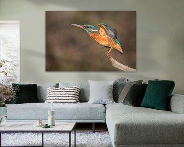 IJsvogel stijgt op von Ben Bokeh