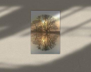 Bäume an der Ruhr