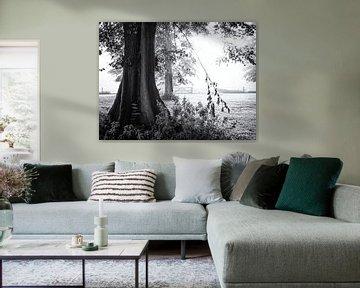 Hek verborgen in de mist achter bomen van Paul Beentjes