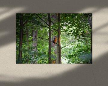 Junger Waldkauz van Patrice von Collani