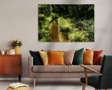 Bos riviertje met varens in de zon van Dennis van de Water