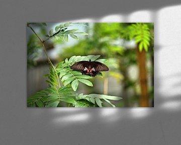 Schmetterling von Jop Fotografie