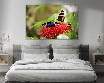 Drei Schmetterlinge  von Jop Fotografie