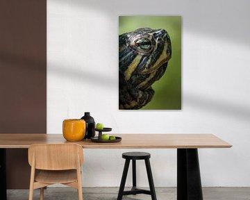 Schildpad von Kim van Dijk