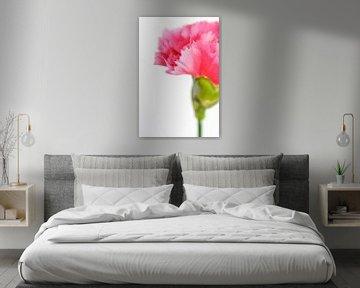 Close up roze anjerbloem von Natascha Teubl