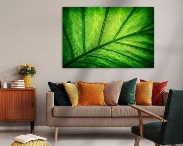Blad - Groen van Jacqueline Lemmens