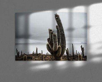 Cactus in Salar de Uyuni von Arno Maetens