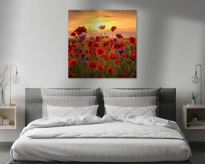 Beispiel: Mohnblumen von Steffen Gierok