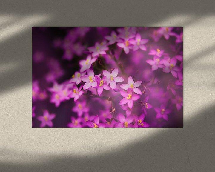 Sfeerimpressie: Paarse bloemetjes van Jacqueline Lemmens