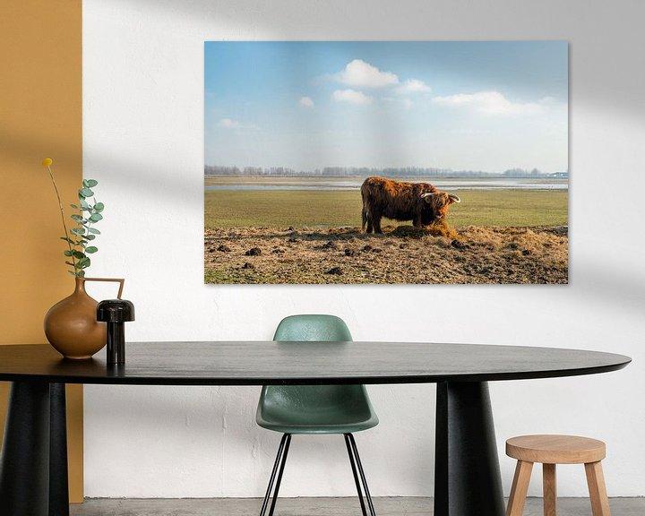 Sfeerimpressie: Schotse Hooglander eet hooi van Ruud Morijn