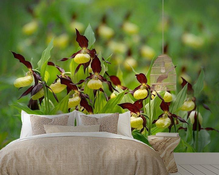 Sfeerimpressie behang: Vrouwenschoentje in volle bloei van Ron Poot