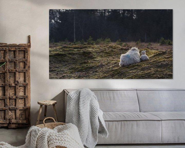 Sfeerimpressie: Schaap met lam van Martzen Fotografie