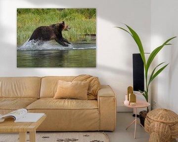 Grizzly rent door water van Muriel Polet