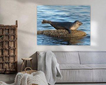Zeehond als meermin von Muriel Polet