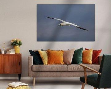 Vliegende volwassen Jan van Gent van Marcel Klootwijk