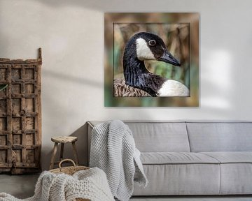 Canada goose van Ursula Di Chito