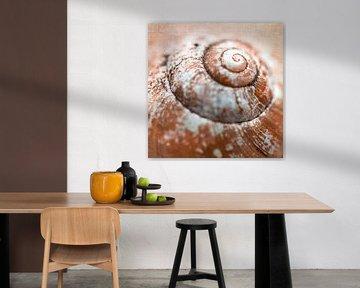 Spirale d'une coquille d'escargot sur Rietje Bulthuis