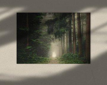 Groen mistig en sfeervol bos van Rob Visser
