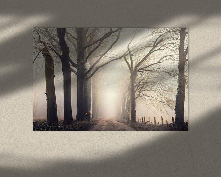 Sfeerimpressie: Forest serene van Rob Visser