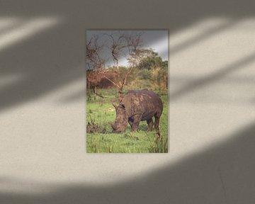 Weißes Nashorn, das friedlich weiden lässt von Geke Woudstra