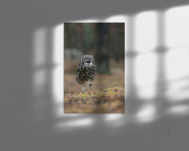 Sfeerimpressie: so funny... Great Horned Owl / Tiger Owl * Bubo virginianus * van wunderbare Erde