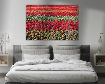 Blumenfeld mit Reihen der roten Tulpen von Ben Schonewille