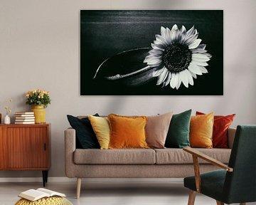 Sonnenblume von Silke Reimann