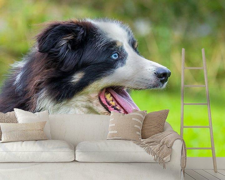 Beispiel fototapete: Kopf Border-Colliehund draußen in der freien Natur von Ben Schonewille