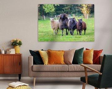 Vier Schafe laufen nebeneinander in Wiese von Ben Schonewille