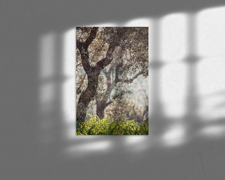 Sfeerimpressie: olijfbomen in Portugal van Huib Vintges