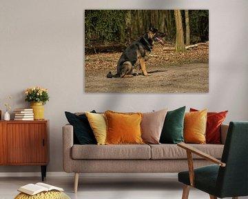 Deutsche Schaeferhund von Coosje Wennekes