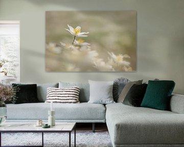 A cloud of wood anemones von Lia Hulsbeek Brinkman