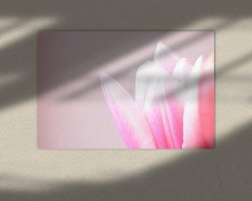 Roze tulp II von Manon Sloetjes