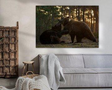 Europäischer Braunbären * Ursus arctos *, Kräftemessnen von wunderbare Erde