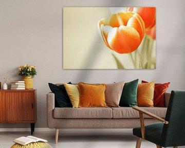 Blooming tulips von Manon Sloetjes
