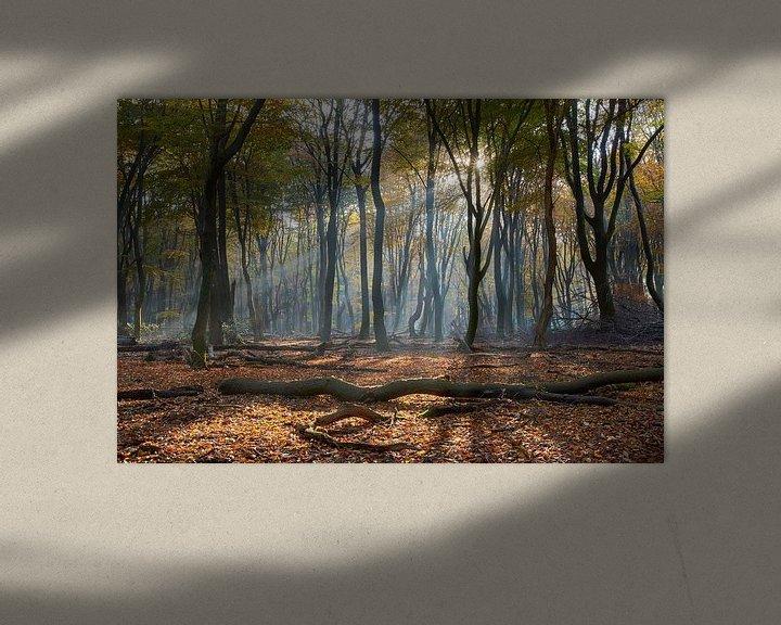 Sfeerimpressie: Lichtstraal in het Speulderbos van Cor de Hamer