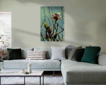 Magnolia bloesem in diffuus licht van Christine Nöhmeier