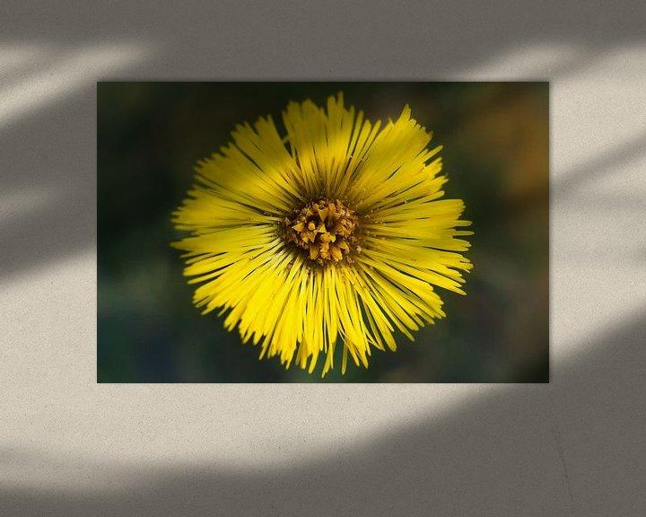 Sfeerimpressie: Gele bloem van Arjen Roos