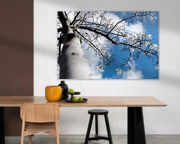 magnolia tree  van Nienke Stegeman