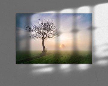 Boom tijdens mistige zonsopkomst van Yorben  de Lange