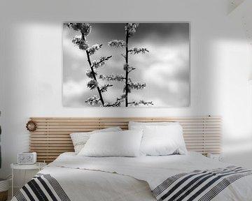 bloesem zwart wit von Nienke Stegeman